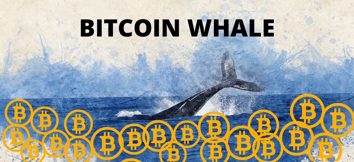 The Whales of the Crypto Tides: a Probe into the World  of the Crypto-Directors