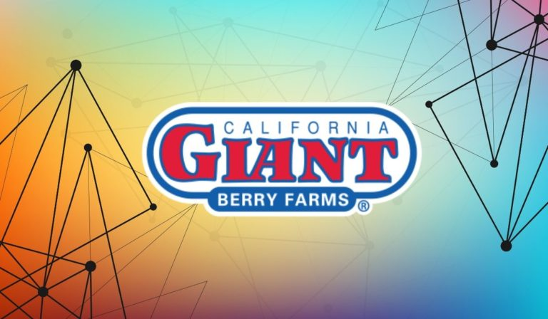 California Giant Berry Farms Employs Blockchain To Achieve Supply Chain Visibility